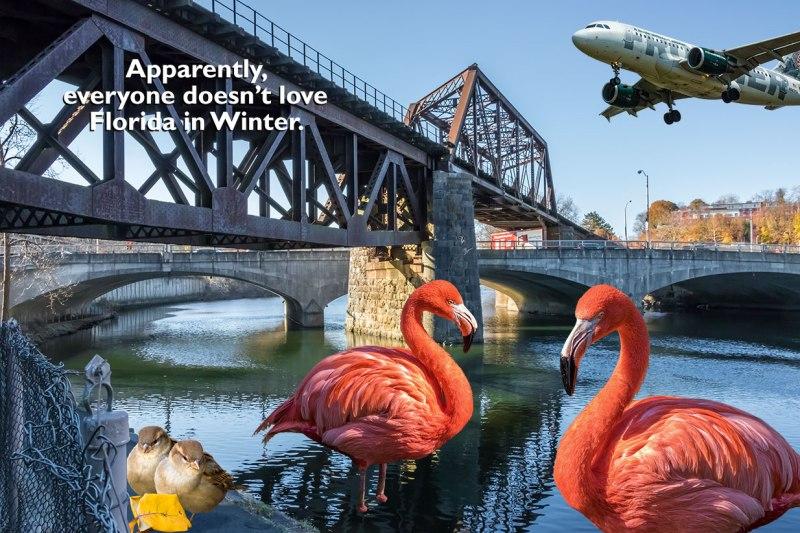 Flamingos-Against-Florida
