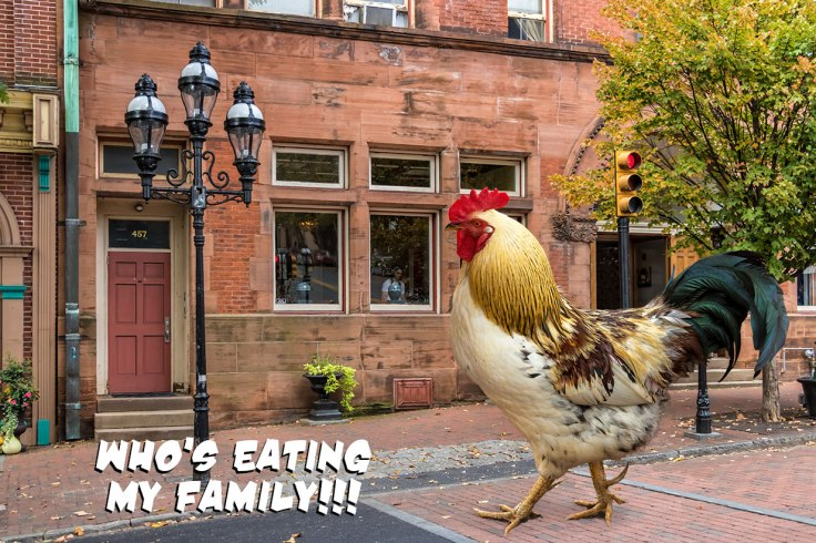 Rooster-Looks-For-Family