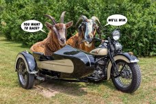Goats-Love-Racing