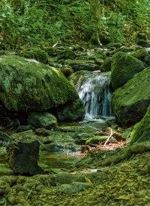 Lush-Wilderness