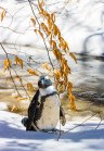Penguin-Says-Winter-Coming-Soon