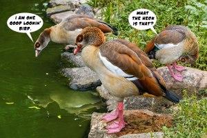 Good-Lookin'-Birds