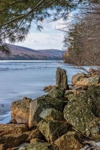 Mauch-Chunk-Lake-Stump-2