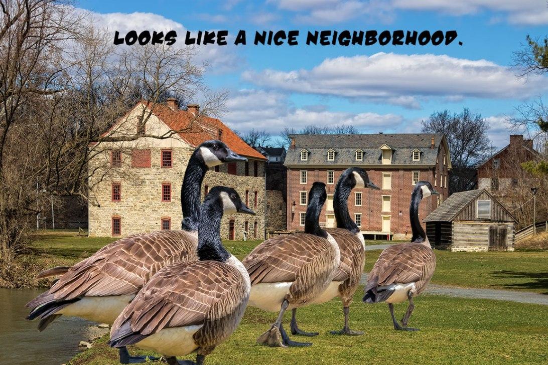 Nice-Neighborhood