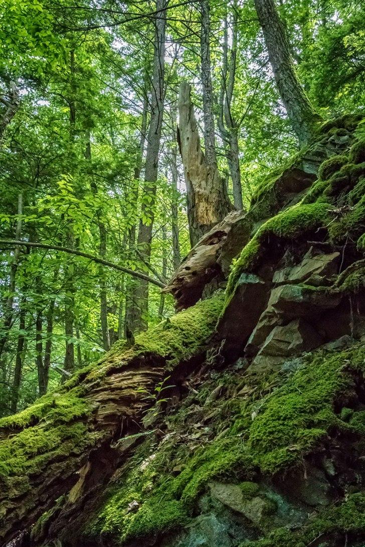 Spring-Woods-1