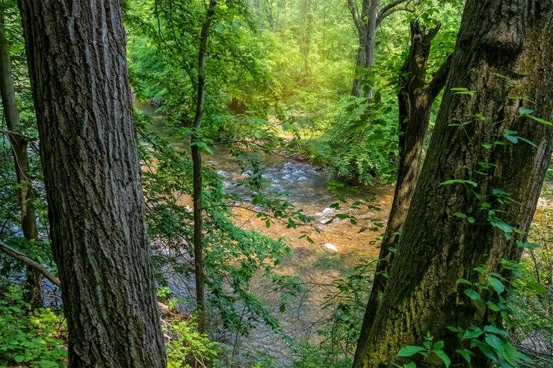 Spring-Woods-2