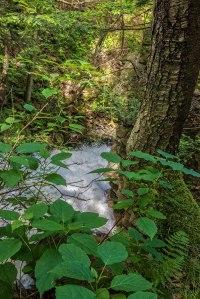 Spring-Woods-5