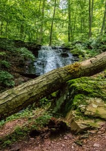 Delaware-Water-Gap-Forest-1