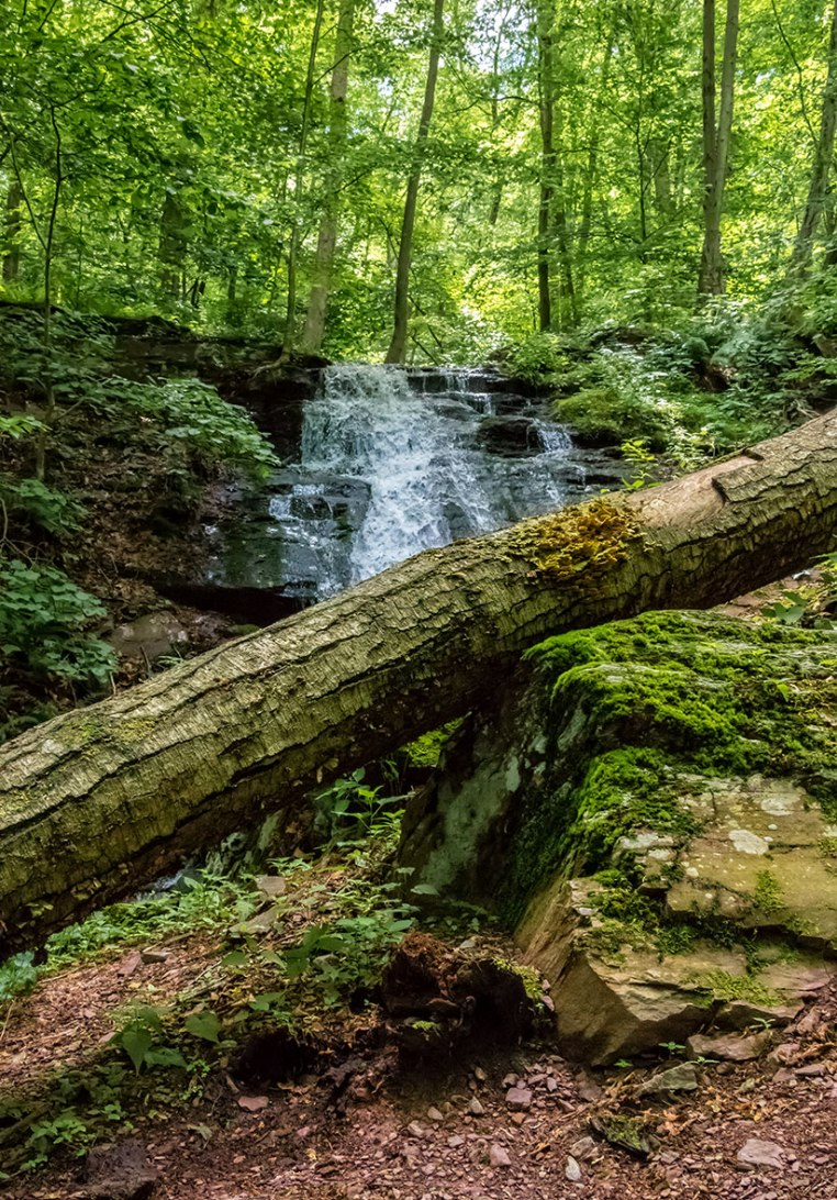 Delaware-Water-Gap-Forest-1