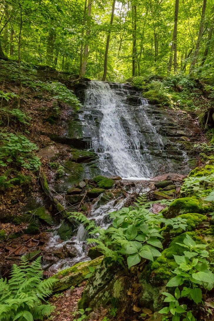 Delaware-Water-Gap-Forest-2