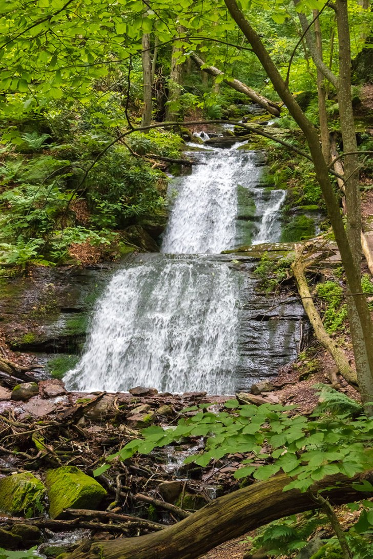 Delaware-Water-Gap-Forest-3