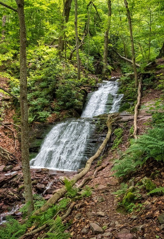 Delaware-Water-Gap-Forest-4