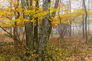 Austin-Blakeslee-Autumn-1