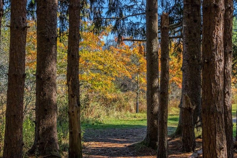 Austin-Blakeslee-Autumn-2